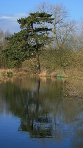 The reflection in the Bure