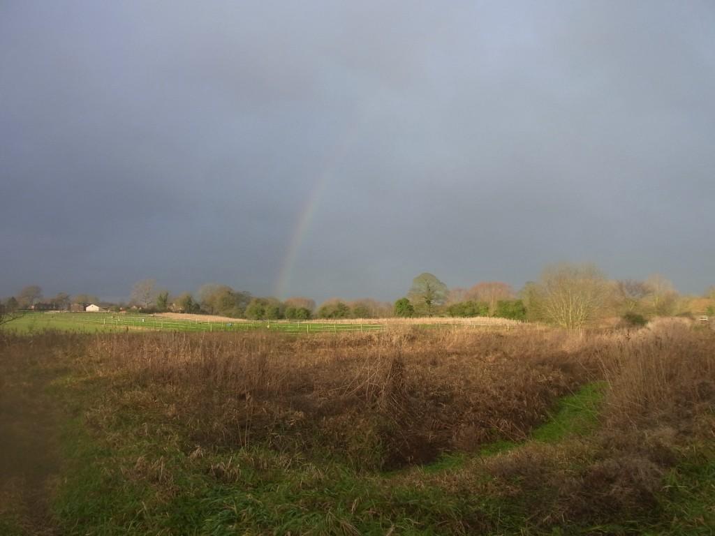 Rainbow on the marsh